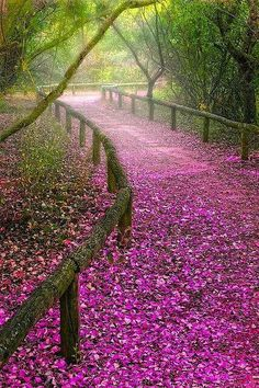 .#PINK Lovely