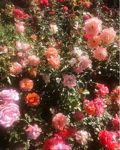 Image discovered by 𝔻𝕣𝕖𝕒𝕞𝕤&𝕎𝕚𝕤𝕙𝕖𝕤. Find images and videos about pink, aesthetic and flowers on We Heart It - the app to get lost in what you love. Nature Aesthetic, Flower Aesthetic, Aesthetic Vintage, Aesthetic Photo, Pink Aesthetic, Aesthetic Pictures, Aesthetic Beauty, Travel Aesthetic, Photography Aesthetic
