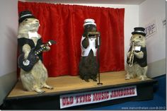 Old Tyme Music Jamboree stuffed gophers at Gopher Hole Museum, Torrington Alberta - This is My Canada