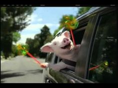 One of my favorites... I never cease to giggle. | Geico introduces Maxwell the Pig... wee weee weeee!