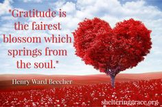 """""""#Gratitude is the fairest blossom which springs from the soul."""" - Henry Ward Beecher #quotes"""