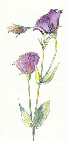 Original Watercolour Pencil Illustration . Purple Flowers Watercolour on Etsy, $22.95