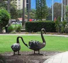 The famous black swans of Perth are represented in all their 'cheeky' nature, these birds are the reason our river was named the Swan.