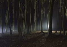 darkness - Strange lights in the woods at night.
