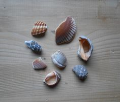Shell fragments, craft supply, 8 pieces, jewelry supplies, surf tumbled shell fragments C17 di lepropostedimari su Etsy
