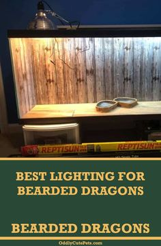 Best Lighting For Bearded Dragons Bearded Dragon Heat Lamp, Bearded Dragon Lighting, Bearded Dragon Habitat, Bearded Dragon Cute, Reptile Habitat, Reptile Cage, Reptile Enclosure, Reptile Heat Lamp, Guinea Pigs