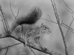 Wildlife Scratchboard Art, Zimmerman, Kangaroo, Wildlife, Artist, Animals, Baby Bjorn, Animales, Animaux