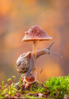 Snail by Rui Pedro Guerra on Nature Animals, Animals And Pets, Cute Animals, Wildlife Nature, Woodland Animals, Amazing Animals, Animals Beautiful, Beautiful Bugs, Amazing Nature
