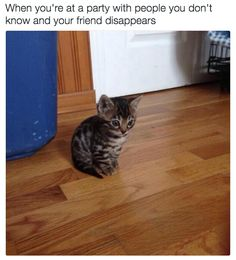 This betrayal: | 18 Cat Memes Literally Everyone Will Relate To