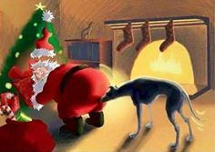 Santa brings surprises to greyhounds who have been good & he wasn't expecting to get one, too!