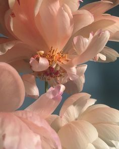 Peach Aesthetic, Flower Aesthetic, Aesthetic Art, Aesthetic Pictures, Flowers Nature, Beautiful Flowers, Living In London, Photocollage, Belle Photo