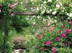 www.rustica.fr - Des rosiers bien mis en scènes : le charme d'une pergola
