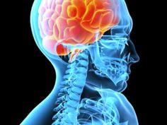 "Your ""Healthy"" Diet Could Be Quietly Killing Your Brain - book > The Grain Brain article October 2013 Migraine, Lesão Cerebral, Post Concussion Syndrome, Guillain Barre, Cidp, Grain Brain, La Constipation, Web Design, Neuroplasticity"