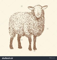 sheep illustration - Google Search