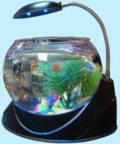 A small aquarium can dramatically change the look of your room Glass Aquarium, Aquarium Lighting, Aquarium Fish Tank, Fish Tanks, Betta Tank, Fish Aquarium Decorations, Aquarium Ideas, Outdoor Ponds, October Crafts
