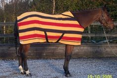 Fitted Witney Horse Blankets