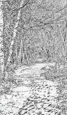 #Trail through a #winter #forest by Leif Sohlman