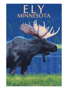 Ely, Minnesota - Moose at Night Prints by Lantern Press at AllPosters.com