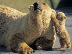 Bear Mom and Baby Bear