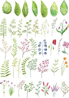 A vector set of watercolor plants and branches Aquarell Blumen und Zweige Lizenzfreies aquarell blumen und zweige stock vektor art und mehr bilder von 2015 The post A vector set of watercolor plants and branches appeared first on Welcome! Free Watercolor Flowers, Watercolor Plants, Watercolor Leaves, Watercolor Cards, Watercolour Painting, Floral Watercolor, Watercolors, Watercolor Artists, Watercolor Portraits