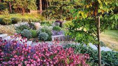 Min trädgård i juni förra året.Har ju visat bilden förut, men tycker så mycket om den Silver, blått, grönt och vitt. Med några utropstecken i rött. I förgrunden syns den röda stjärnflockan 'Star of Fire'. #gardening #havtorn #gillenia #kantnepeta #buxbom #pagodkornell #blodax #svartakleja #storbladigalammöron