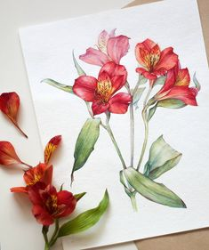 Angelina Gradil . (@lina_gradil) в Instagram: #art #watercolor #painting #paint #pink #watercolour #draw #drawing #flower #flowers #цветы #watercolor #watercolour #aquarelle #waterblog #worldofartists #drawing #painting #art #artist #artshelp #artgallery #artweinspire #topcreator #inspiringwatercolors #inspiration #flowers #botanical #botanicalart #illustration #акварель #вдохновение #иллюстрация #pink