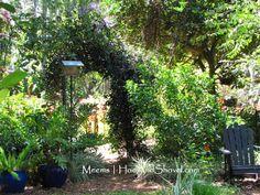 Decorative ... Meet Functional #hoeandshovel #hoeandshovelgarden #FloridaFriendly #birdhouses