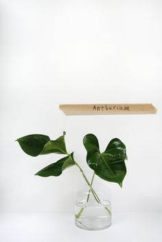 April and May| green must have in june: anthurium #leaf