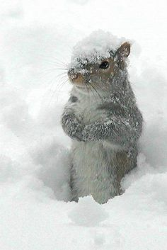 snow | MARMOTTE A FROID