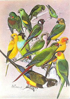 I love bird paintings!