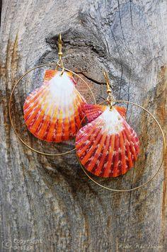 Pecten Sea Shell Gold Hoop Earrings, sunrise colors or sometimes purple-ish colored, Hawaiian sea shell Earrings, Beach Earrings, Gold wire