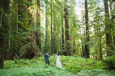 Redwood Forest Wedding | Heather Armstrong Photography