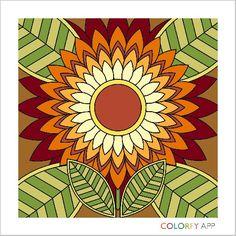 Colorfy Florals