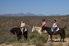Madi-Madi Karoo Safari Lodge - Horse safaris South Africa, Safari, Cow, Things To Do, Horses, Animals, Things To Make, Animales, Animaux