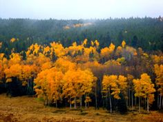 We call this the hidden valley. Beautiful isn't it Fall 2014