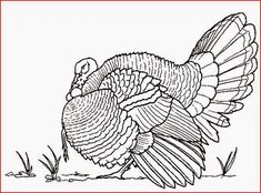 turkey coloring pages coloring.filminspector.com