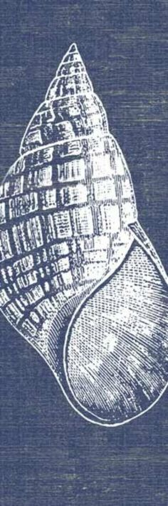 Indigo Denim Blue and White Shell Art Print