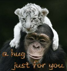 {Latest*} Happy Hug Day HD wallpapers and Photos-Hug day 2015 | Happy Valentine Day 2015