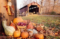 Fall in the Country - Why Fall is The Best Season