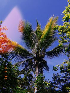summer palm trees photography with huji