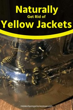 Do you need to know how to get rid of yellow jackets? Learn how to locate the nest. How to get rid of them using no pesticides or harsh chemicals. Wasp Traps, Bee Traps, Yellow Jacket Trap, Yellow Jackets, Organic Gardening, Gardening Tips, Vegetable Gardening, Flower Gardening, Getting Rid Of Bees