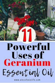 Geranium Essential Oil is one of the oils I overlooked for a long while until I realized it's powerful benefits. Check this out and get some of this awesome oil for yourself. #antiaging #essentialoil #diyskincare #livelesstoxic