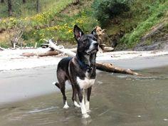 Buddy, Jake's best friend.