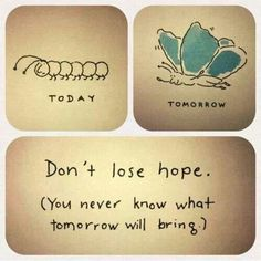 Inspiration to never lose hope! Repin this image to share with others.