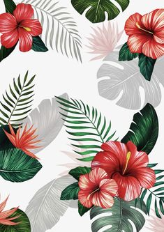66 ideas flowers background wallpapers paper for 2019 Flower Background Wallpaper, Tropical Background, Plant Wallpaper, Tropical Wallpaper, Summer Wallpaper, Cute Wallpaper Backgrounds, Pretty Wallpapers, Wallpaper Iphone Cute, Flower Backgrounds