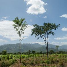 Bäume pflanzen und Leben erhalten #davines #isustainbeauty
