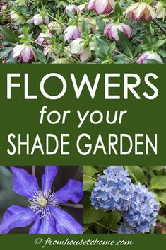 GREAT list of plants to grow in shade with lots of different perennials and shrubs for growing outdoors in your garden. It really helped me pick plants for the flower beds in my backyard.  #fromhousetohome #gardeningtips #gardenideas #shadegarden #shadeplants #perennials