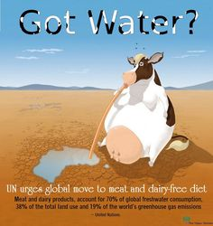 got water? the UN urges global move to meat and dairy-free diet. meat & dairy products account for 70% of global freshwater consumption, 38% of the total land use and 19% of the world's greenhouse gas emissions.