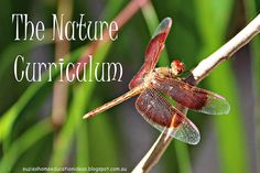 The Nature Curriculum - Looking at how to use nature as a learning tool to cover different subjects with suggested activity ideas on how this can be done through interest-led learning.