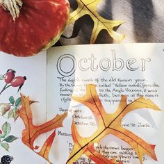 """Then came October full of merry glee."" -Spenser . . . #autumn#momentslikethese#thatauthenticfeeling#theartofslowliving#liveauthentic#seekthesimplicity#littlestoriesofmylife#momentsofmine#aquietstyle#thatsdarling#darlingmovement#dslooking#abmlifeissweet#abmhappylife#petitejoys#livethelittlethings#nothingisordinary#nothingisordinary_#nestandflourish#postitfortheaesthetic#theeverydayproject#thehappynow#kinfolk#aquietlife#slowliving#livefolk#myfabuloustoday2016"